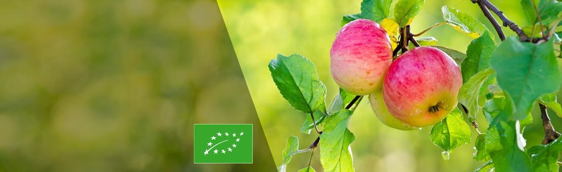 ocet-jablkowy-baner